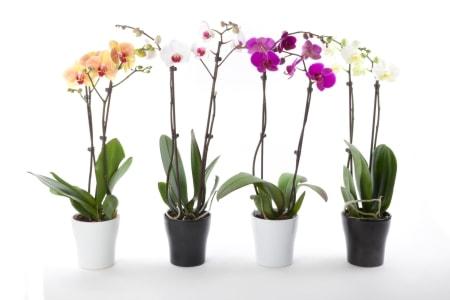 las plantas en el feng shui
